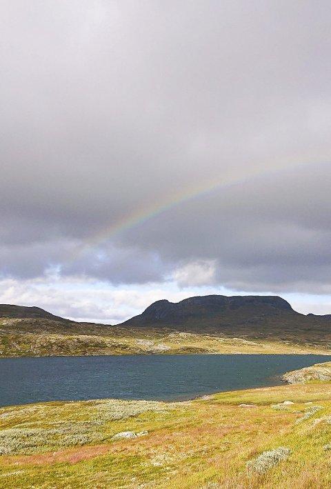 Måndag melde Torleif Fresvik at fleire flokkar hadde vestleg trekk. Bilde frå Kollsvatnet ved Litlos.