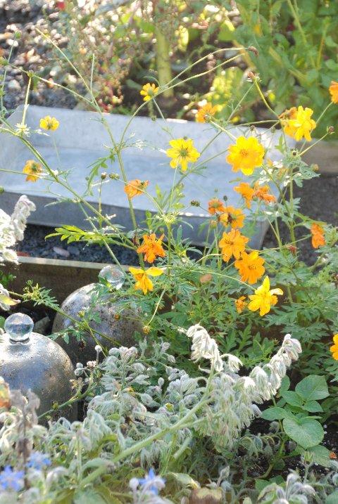 GYLDNE TIDER: Høsten har et ufortjent dårlig rykte i hagen. Dette er på mange måter en av de vakreste tidene på året.