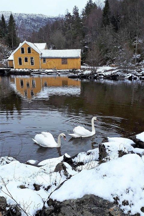 Her er den gamle treskofabrikken innramma i nysnø og med to kvite svaner i pøyla framfor fabrikken.