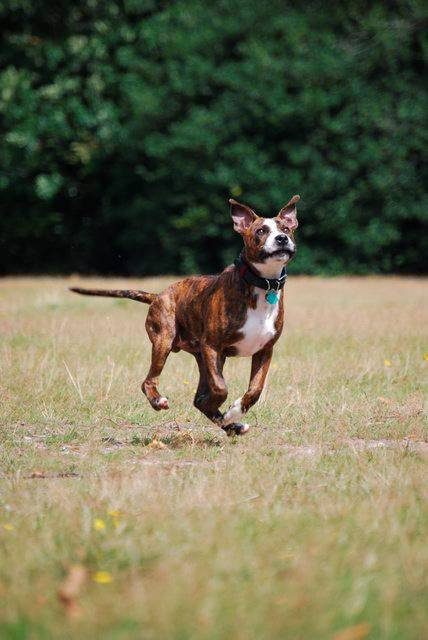 Kjøpte hund: Den nye hunden var langt fra slik kvinnen hadde drømt om. Hundekkjøpet i Rakkestad endte med rettssak. Hunden på bildet har ingenting med saken å gjøre.