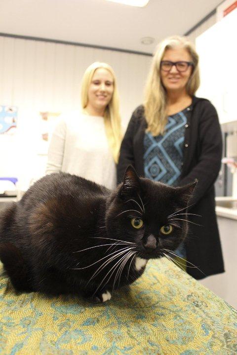 Trygg: Svartemaja er dyrepleier Camilla Takvams (til v.) katt. Hun jobber på Nesodden dyreklinikk som har engasjert seg i arbeidet til Kari Rolland og Nesoddkatten. – Folk viser en fantastisk velvilje til å hjelpe til. Det motiverer, sier Kari Rolland.