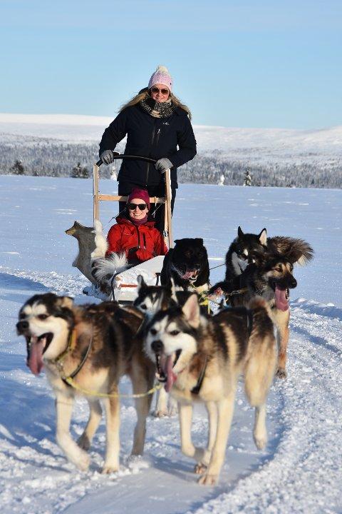 POPULÆRT: Sjusjøen Husky Tours klarer ikke å dekke etterspørselen etter turer med hundeslede. Nå utvides virksomheten i retning Hafjell, hvor det også er etterspørsel fra folk som ønsker å kjøre hundeslede i fjellet.