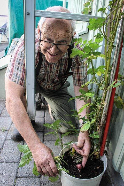 HJEMMEPROSJEKT: I april satte Sverre Isaksen en vanlig matpotet i en potte med jord i garajsen. Nå er den over to meter høy, og små poteter har kommet frem.