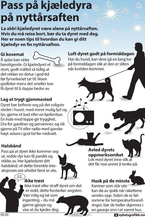 La aldri kjæledyret være alene på nyttårsaften. Hvis du må reise bort, bør du ta dyret med deg. Her er noen tips til hvordan du kan gi ditt kjæledyr en fin nyttårsaften.