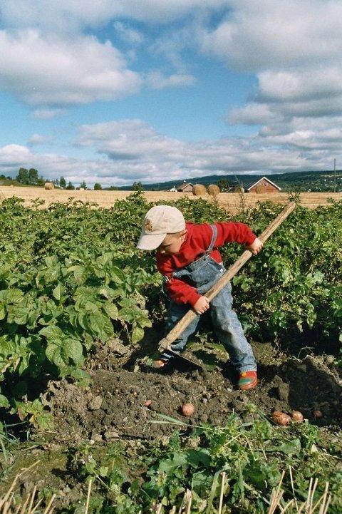 BYGDEDAG: På søndag kan du plukke poteter på bygdedagen på Granavollen.