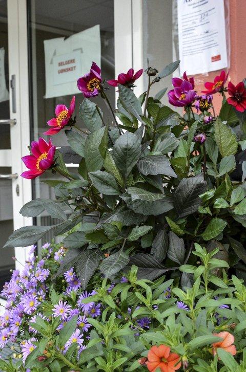 BAKSIDEN: Vakre blomster ved inngangen på baksiden av Veldre bo-.