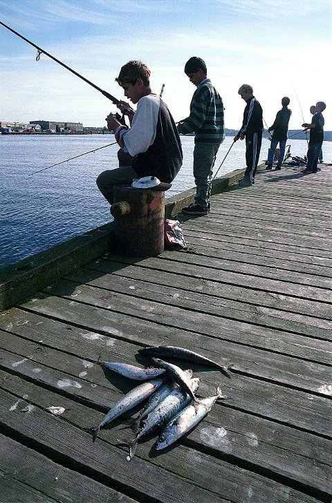 BRYGGEFISKE. En renere fjord har ført til at bryggefisket har tatt seg opp i havnebassengene i Larvik og Stavern. Her har det åpenbart blitt mer enn nok småmakrell for en middag.