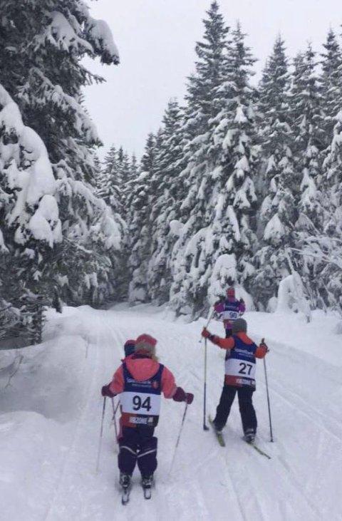 IDYLLISK: Flotte løyper og idyllisk i skogen på Ollmoen.