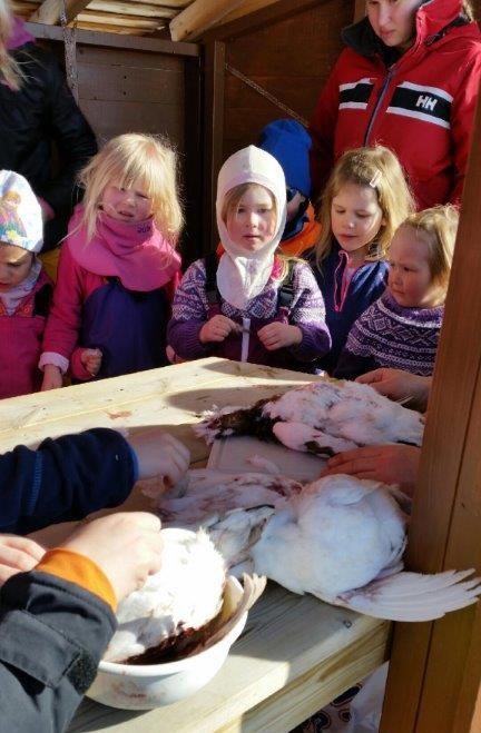 Denne uka fikk barna demonstrert flåing av ryper