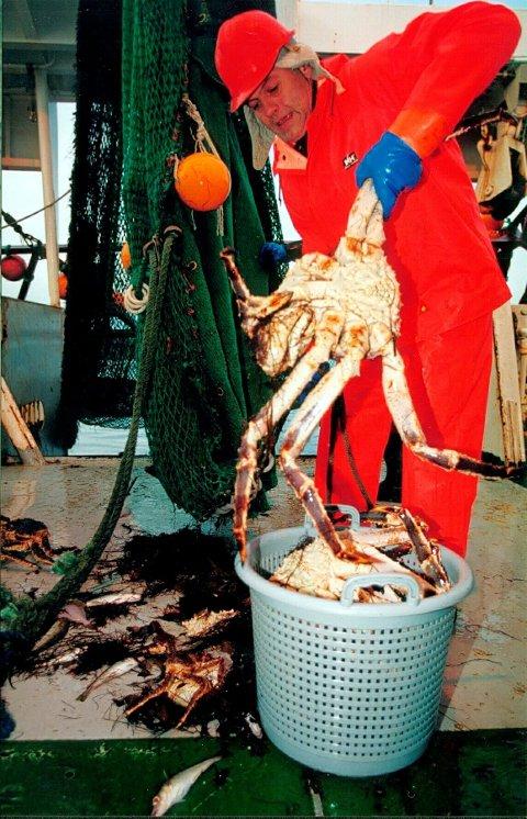 Kongekrabbe: Forsker Jan H. Sundet ved Fiskeriforskning AS i Tromsø måler størrelsen på kongekrabbe fra Finnmark. Foto: Frank Gregersen