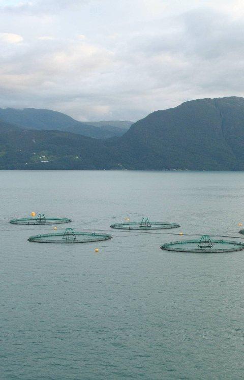 Innan 1. mai neste år skal Havforskingsinstituttet og Veterinærinstituttet leggja fram eit forslag.
