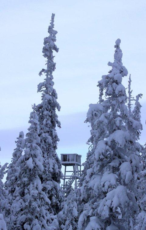 UTSIKTSPUNKT: Tårnet på Lauvhøgda