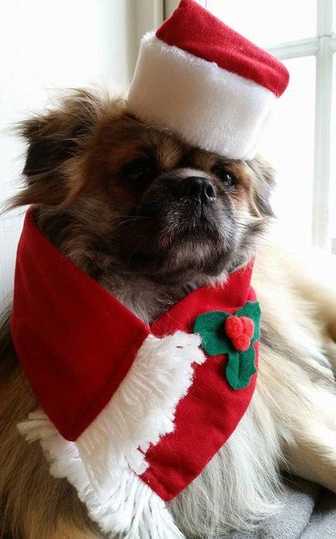 Konkurranse: Del bilder på Instagram med #1000førjul. Bildet må være relatert til minst to av følgende tema: jul, vinter, dyr, mennesker. Her er et bidrag til ØPs julekortkonkurranse i 2015.