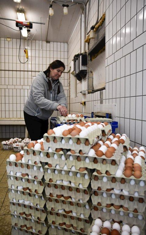 BRUNE OG HVITE: Det kommer både brune og hvite egg på samlebåndet ut fra hønehuset, og Berit Wiersdalen stabler dem i kartonger før resten av prosessen starter.