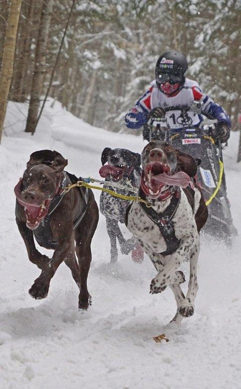 Like ivrige: Det var ikke noe mindre energi i hundene når sønn André konkurerte med dem. Foto: Lotte Friid Fladeby