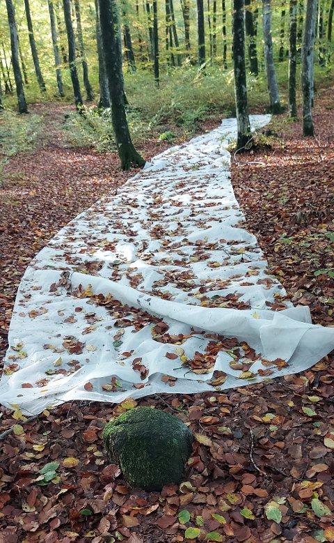 MYSTERIET LØST: Dette synet møtte Mikal Bell på en av sine vante turer gjennom skogen på Fokserød. Nå vet vi hva duken er.