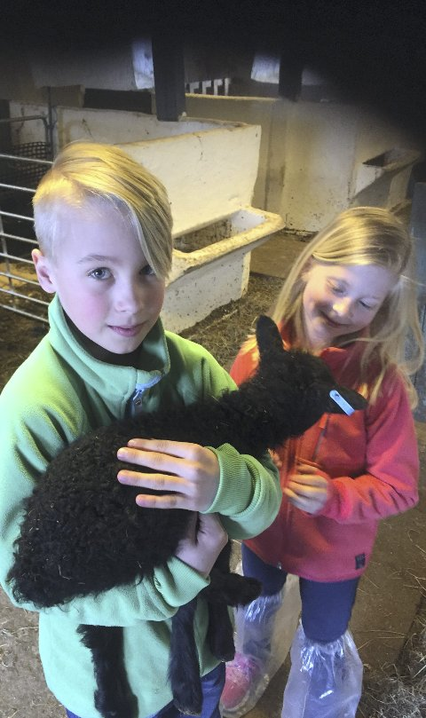 HJELPER TIL: Amalie (7) og Adriel Dalstein Engeli Møller (9) hjelper til i fjøset på Brustad gård under lammingen. Her skal 100 lam komme til verden i løpet av tre uker.
