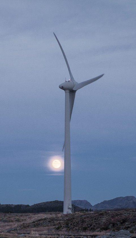 Krever stans: Narvik og omegn turistforening krever stans i ytterligere vindkraftutbygging.