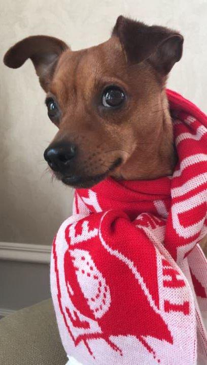 Mariann Høilis hund, Max, støtter FFK.