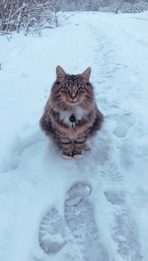 Albert på vinteren