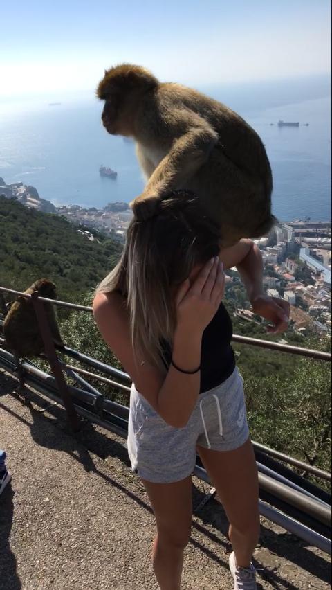 UBLIDT MØTE: Alt gjekk ikkje som det skulle då KVV-eleven skulle ta bilde med denne apekatten i Gibraltar.