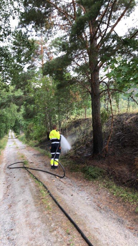 SVIDD: Skogen har blitt svidd av flammene, som nå er slukket.