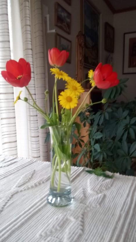 FARGER: Gule prestekrager og tre tulipaner.