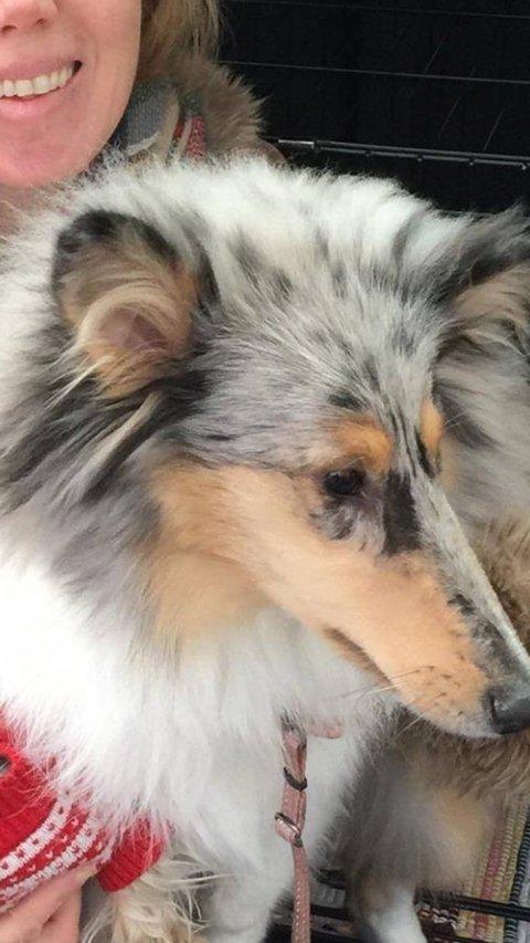 BORTE: Hunden Sunny har vært borte siden 12.30-tiden onsdag.