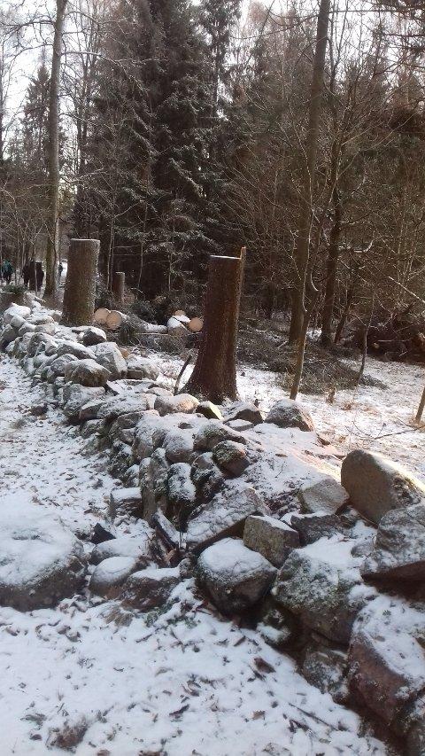 Vilkårlig villhogst i Ekebergparken