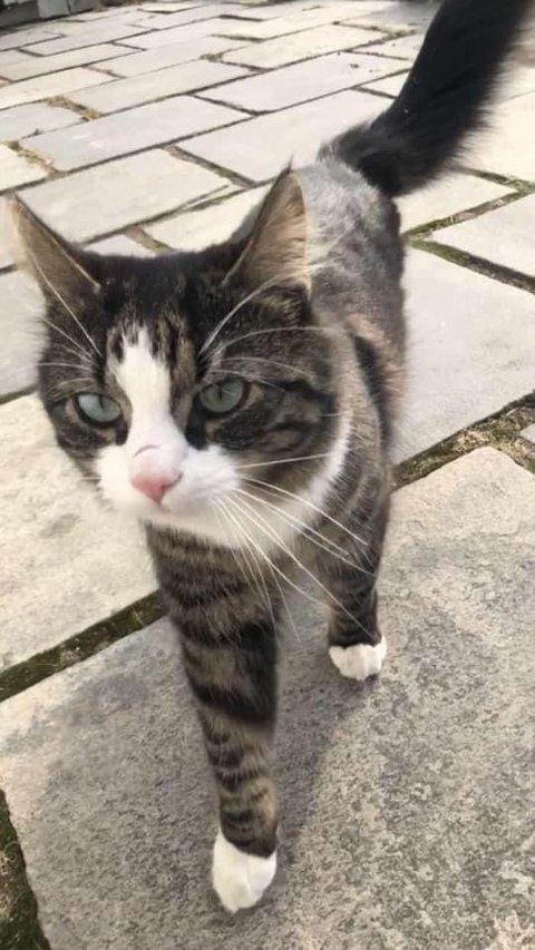 Savnet katt i Maura