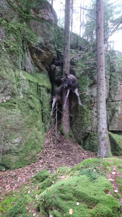 SJELDENT SYN: Elgjegeren trodde nesten ikke sine egne øyne da han oppdaget dette synet i skogene i Tanums kommun.