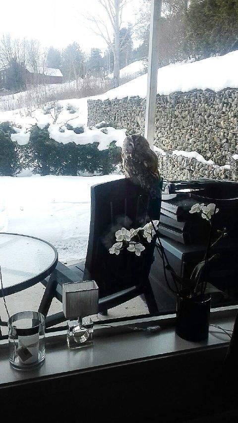 Det var trolig en kattugle som satt seg utenfor vinduet til Anne Mette Trippestad.