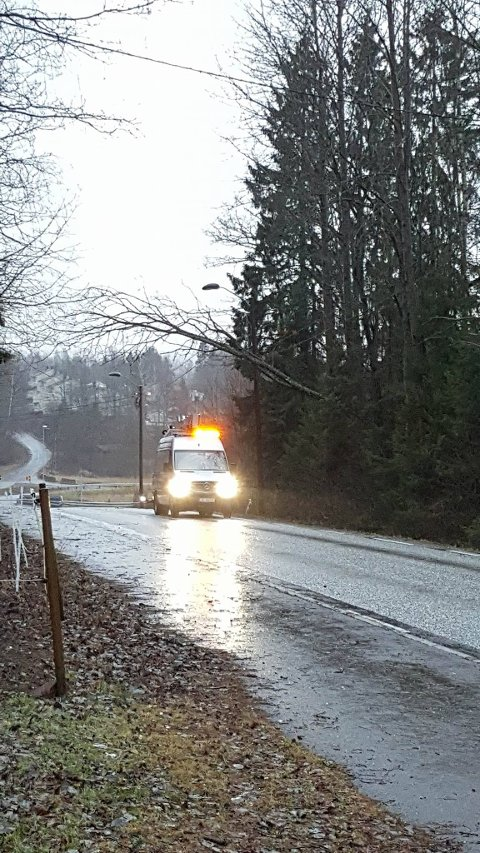 OVER LEDNINGER: Dette treet veltet og ble liggende over en strømledning på Adalsveien i Skoppum.
