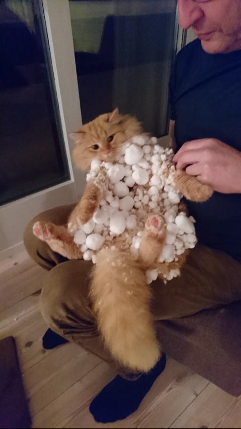 Katten Leon etter to timar i snøen.