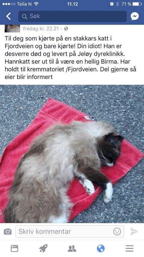 PÅKJØRT: Denne katten ble påkjørt i Fjordveien fredag 19. mai. Hendelsen ble delt på Facebook.