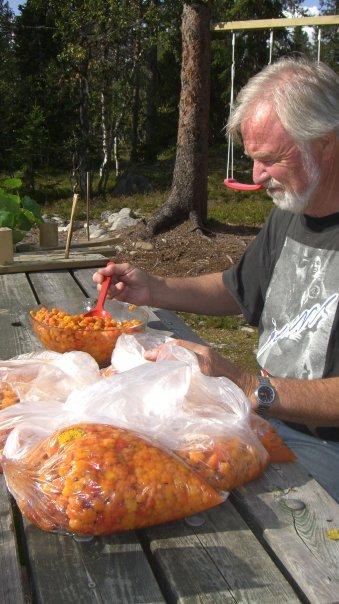MULTE: Knut H. Sveen liker å plukke bær, deriblant multe og forteller at det blir noen kilo hver sesong.