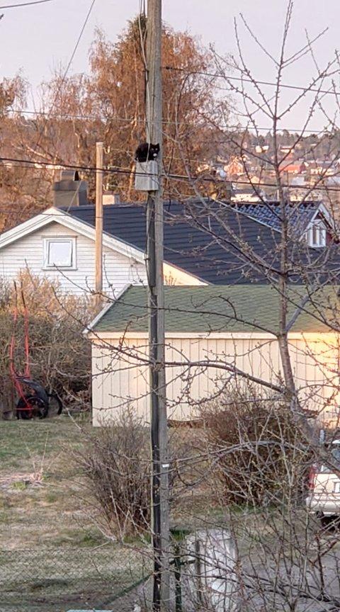 KATTEPINE? Pusen har klatret langt opp i strømstolpen på Eik.