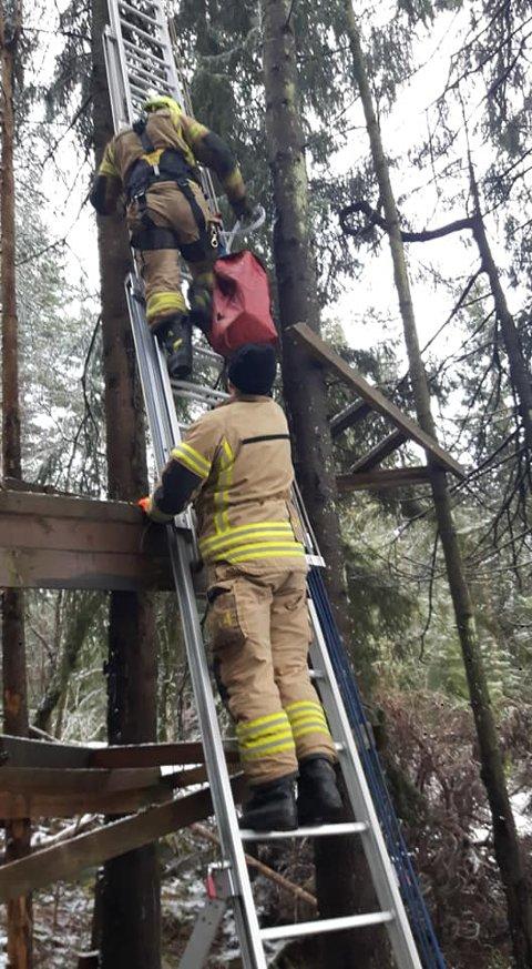 DAGENS HELTER: Katten satt fast minst 15 meter oppe i et tre. Follo brannvesen sørget for at dramaet endte lykkelig.