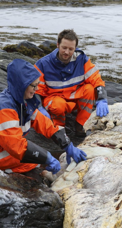 FANN IKKJE PLAST: Martin Malkenes (MDG) og Kaja Standal Moen frå Flora kommune fann ikkje noko plast i kvalen. – Det er gledeleg at det ikkje var noko plast å finne, seier Malkenes.