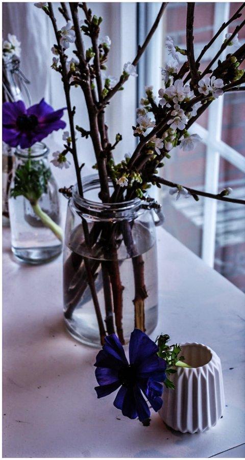 MORELLKVISTER: Grener fra hagen blomstrer så snart de kommer inn.
