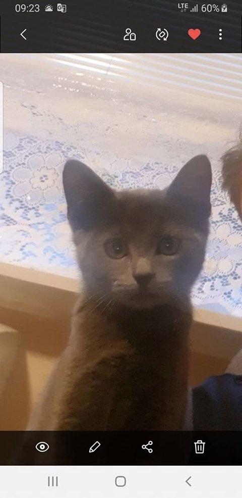 UNG: Dette er et nylig bilde av kattungen. Foto: privat.