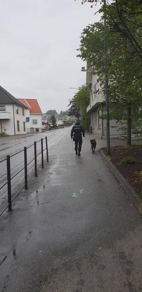 Hundepatruljen er med i et søk opp mot Jærveien.