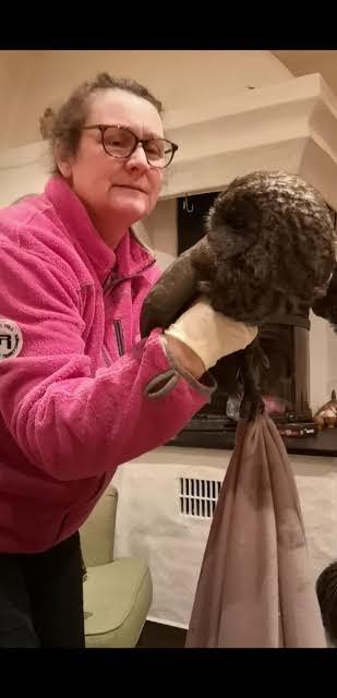 UVANT GJEST: Heidi Kristiansen fikk uglebesøk. Fuglen ramlet ned gjennom pipa og havnet i peisen på kjøkkenet.
