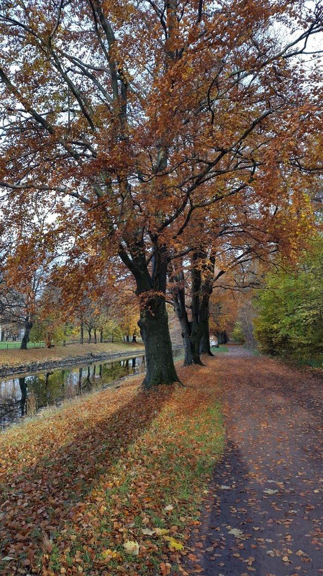 TRÆR: Flesteparten av disse staselige trærne vil antakeligvis fortsatt stå her om 50 år hvis de bare får stå i fred, mener innsenderen.