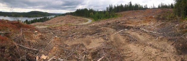 Flatehogst er en av de største truslene mot biologisk mangfold i Norge
