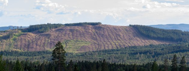 Rammevilkår: Det offentlige må sørge for gode rammevilkår for skognæringa.