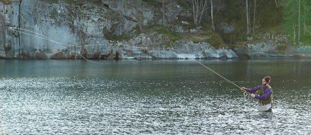 Fluefiske i Håkavika
