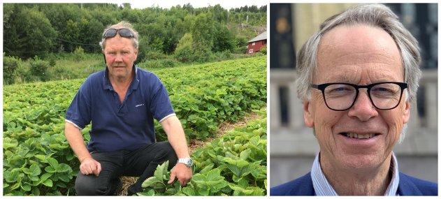 JORDBÆR: Olav Etnestad, jordbærprodusent i Redalen, er leder for bærprodusentene. Han må alliere seg med matkjedene for å få prisen opp. Uten dette blir plukkere borte, produsenter slutter og butikkene mister en viktig sesongvare, skriver Hallvard Grotli.