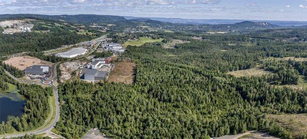 MÅ AVKLARE: Spørsmålet er om denne skogen mellom næringsområdet på Gjellebekk og motorsportanlegget i Leirdalen skal omdisponeres til næringsområde eller helårsanlegg for ski. NILS MAUDAL