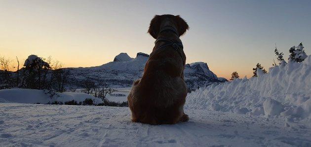 Hund i solnegang på Langeland.